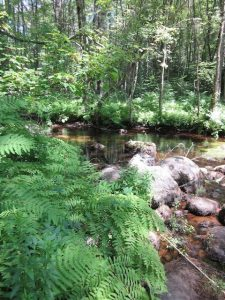 Otter Brook stream at my (now former) residence. Did I mention that my NH hometown is beautiful? Well, it is. And I was sorry to say goodbye to it.