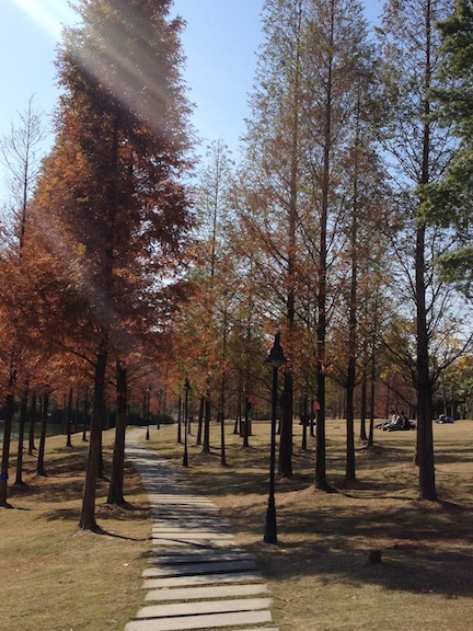 Zhejiang Agriculture and Forestry University